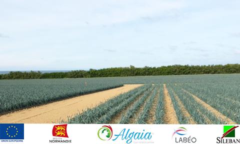 Algaia currently testing seaweed-based biostimulants on leeks as part of APostim project