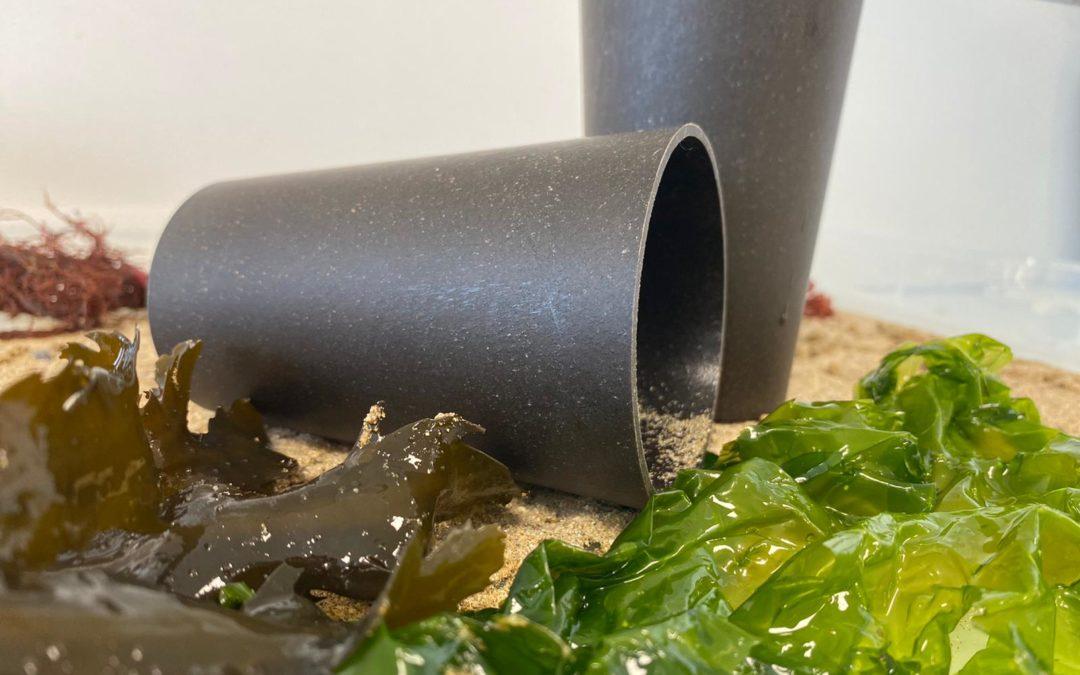 Projet Varech -Algaia explore la piste des bioplastiques à partir d'algues échouées sur les plages normandes